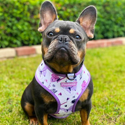 Frenchie dog reversible harness Magical Butterfly