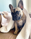 Fawn Frenchie Bulldogge Decke