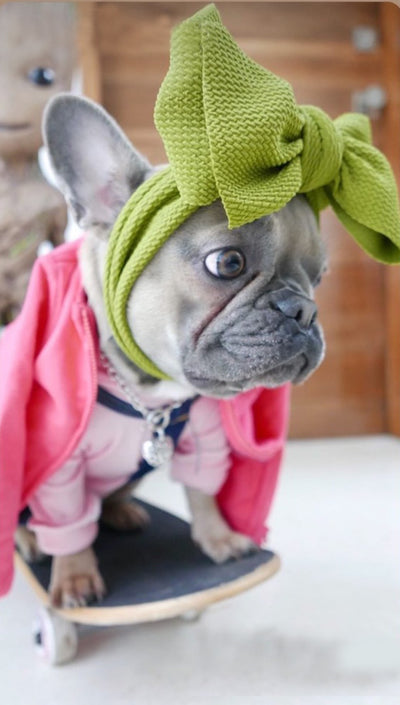 French Bulldog wearing head bow made by Frenchiestore