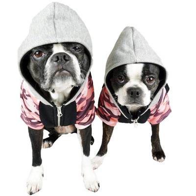 2 Boston Terriers dogs modeling Frenchiestore dog hoodie
