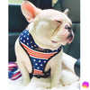White French Bulldog wearing frenchie harness all american design