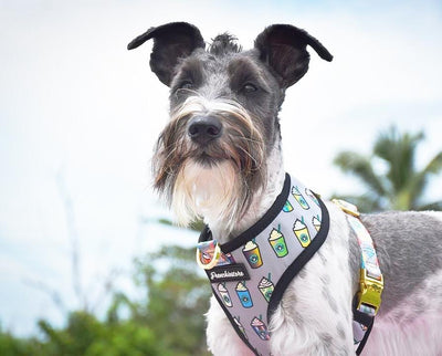 schnauzer dog harness
