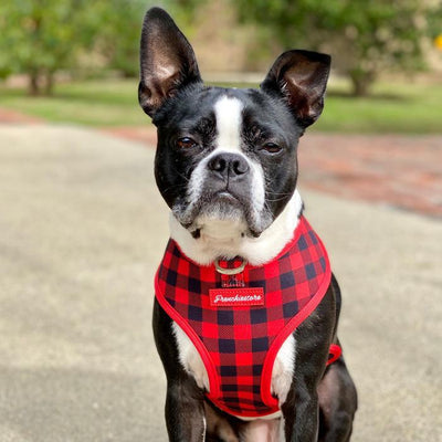 Boston Terrier dog harness red buffalo plaid made by Frenchiestore