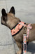 Frenchiestore Adjustable Health Harness | Taco Bout It