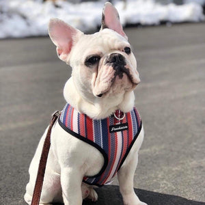 Dual D Ring dog health harness made by Frenchiestore with United States colors stripes