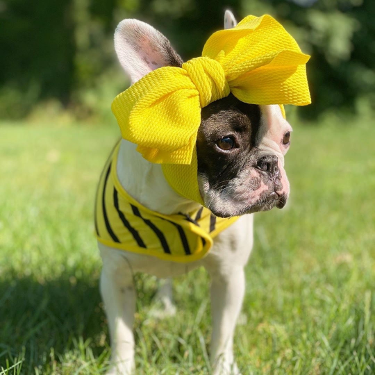 Frenchiestore Pet Head Bow | Yellow, Frenchie Dog, French Bulldog pet products