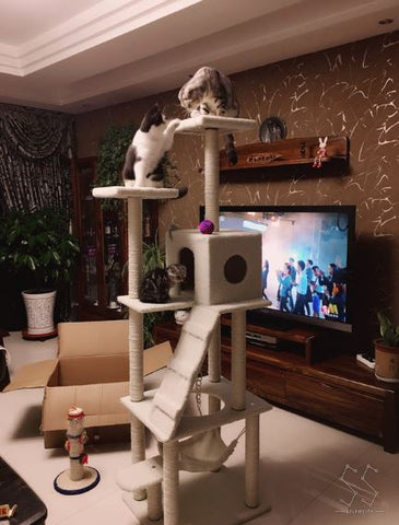 Cat Gym 185cm Tall