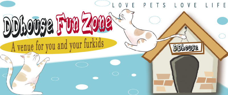 DDhouse FunZone a private venue for you and your cats . private playground for cats and pet studio singapore