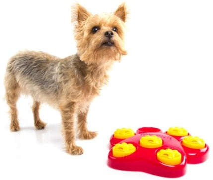 Dog Games Puzzle Dog toys Dog paws tackles hide and seek! Dog paws tackles hide and seek!