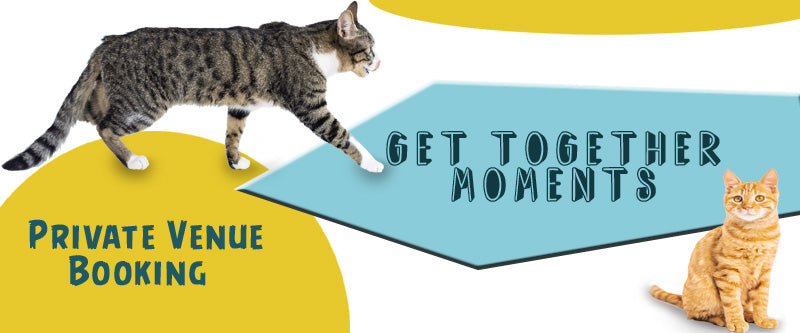 DDHouse FunZone for couples, families , friends and Cats .. Get-Togethers sessions with your cats