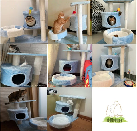 happy cat love cat tree and cat climber ddhouse singapore
