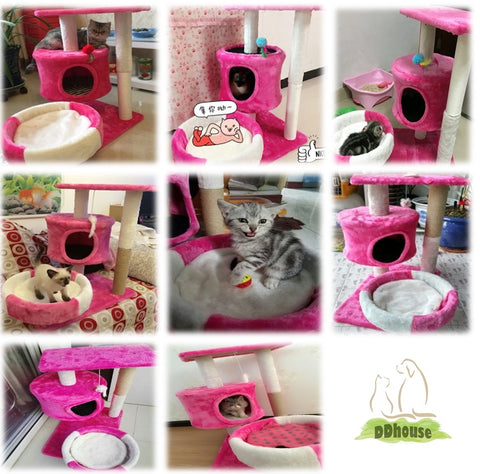 ddhouse online pet supplies singapore