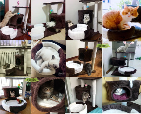Happy cheerful playful cat cat love cat tree