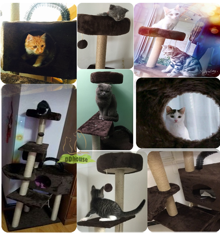 Coffee tall cat scratching post | DDhouse Singapore online Pet Supplies