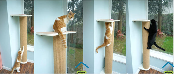 Cat-Friendly Modular Bookshelf Cat Scratching Posts on the wall Cat Scratches Cat Stand
