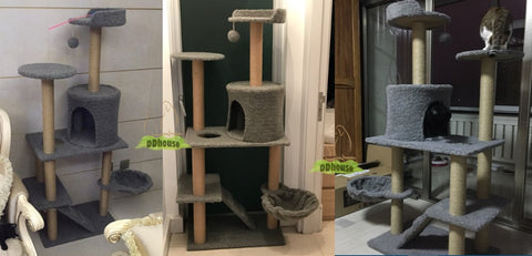 Greyish Cat Climbing Tree For Cat And Kitten