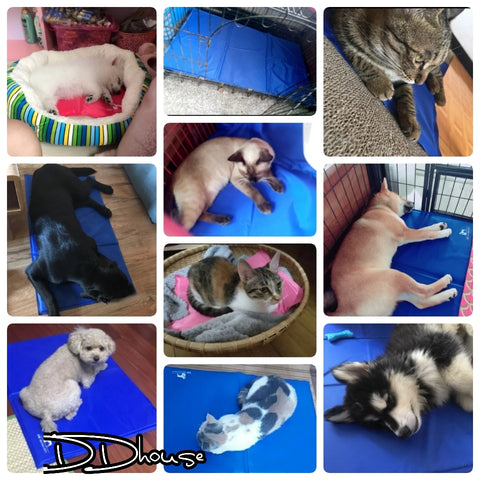 Singapore Cold Pad Cooling Pad For Pets