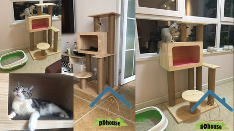 DDhouse Wooden Cat Trees In Singapore Fast Delivery