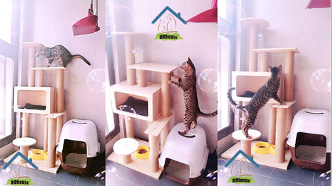 DDhouse Wooden Cat Trees Multiple Designs In Singapore Fast Delivery