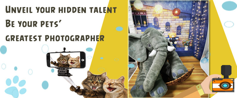 DDHouse Fun zone Singapore Cheap Cat Photography studio and props Pet Family Photoshoot in studio below $20