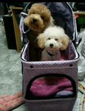 Polka Dot Purple 3 Wheel Pet Pram Pet Stroller - DDhouse Singapore Online Pet Supplies and Pet Products - 5