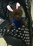 Polka Dot Black 4 Wheel Pet Stroller - DDhouse Singapore Online Pet Supplies and Pet Products - 6