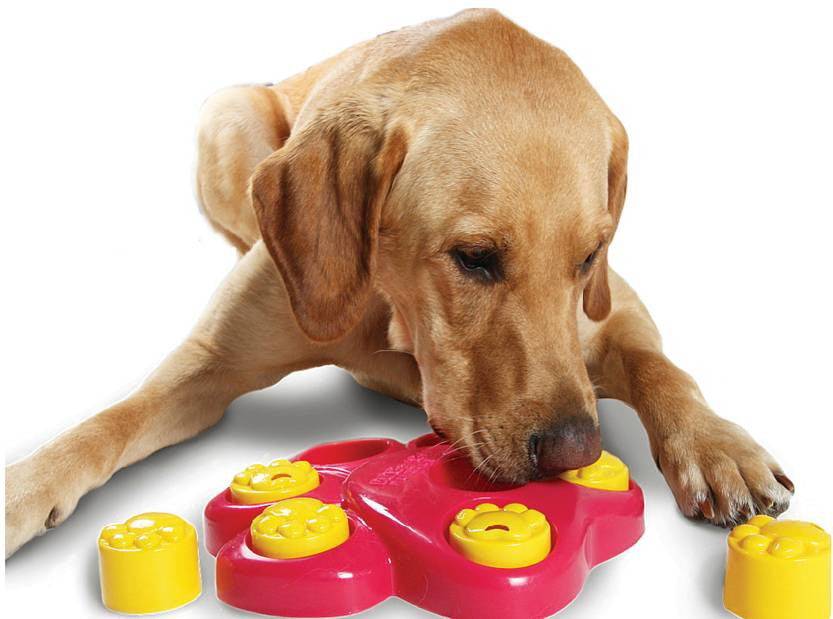 Outward Hound Paw Hide Puzzle Dog IQ Toys - DDhouse Singapore Online Pet Supplies and Pet Products - 1