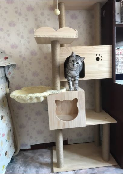Singapore Best Solid wood Cat Trees Free Delivery to your door Step