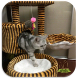 cat playhouse ddhouse online pet product supplies