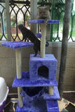 Large Cat Climber Cat Condos - DDhouse Singapore Online Pet Supplies and Pet Products - 7