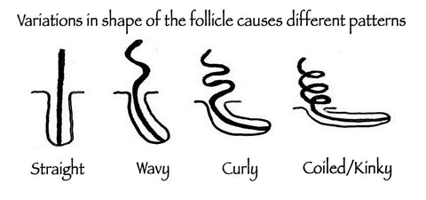 hair follicle shape