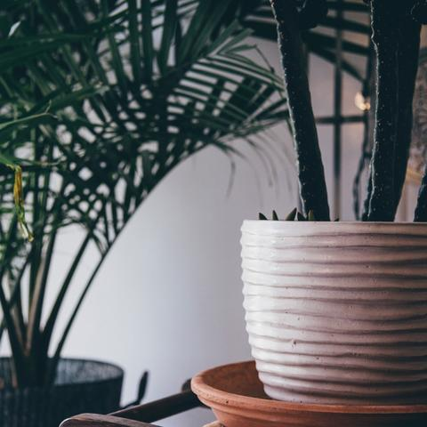 HOUSEPLANT CARE | Nurturing Lush Homes