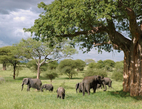 Save an animal, Bucket list, bracelets, Elephant