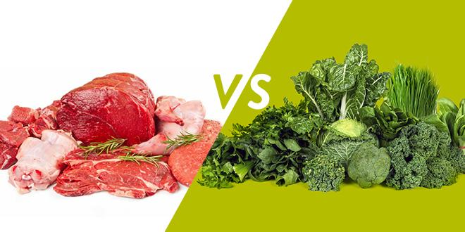 Animal Proteins Vs Vegetable Proteins | THE PROTEIN SHACK