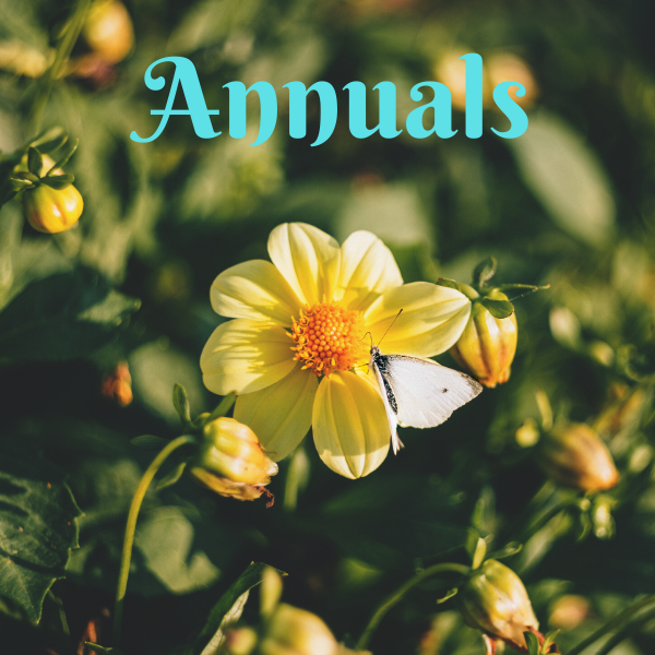 Annual Flowers - America's Gardens