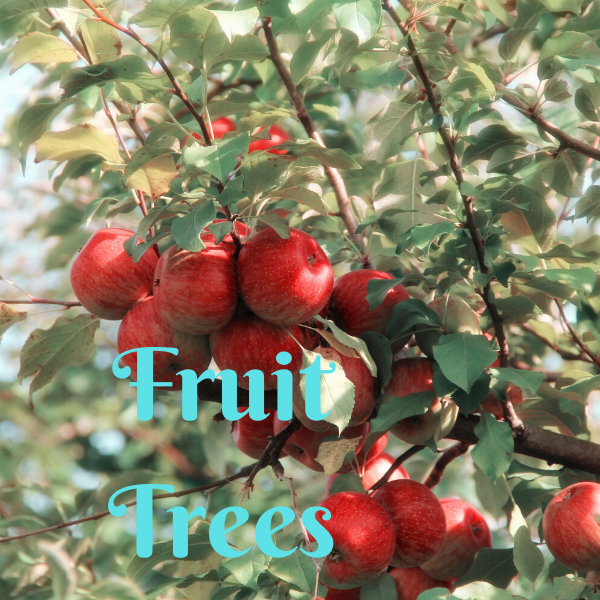 Fruit Trees - America's Gardens