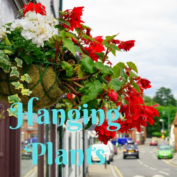 Hanging Baskets - America's Gardens