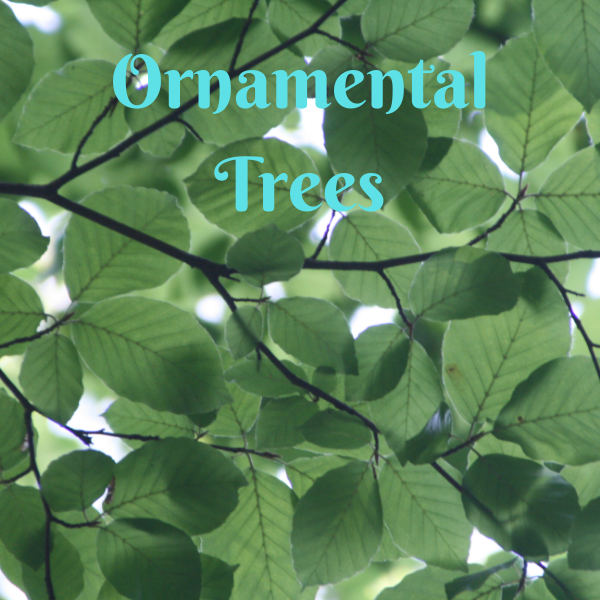 Ornamental Trees - America's Gardens