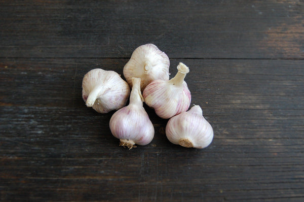 Garlic, Purple bulbs