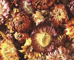 Dried Sunflowers Assorted Pack of 50g - NP005 - Collins Craft and School Supplies