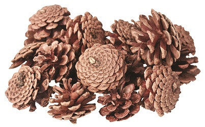 Pine Cones Pack of 200g - NP020 - Collins Craft and School Supplies