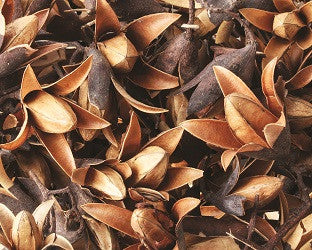 Dried Natural Seedless Flower Pods Pack of 50g - NP056 - Collins Craft and School Supplies