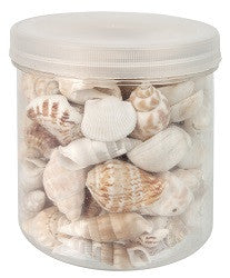 Sea Shells 1kg - NP060 - Collins Craft and School Supplies