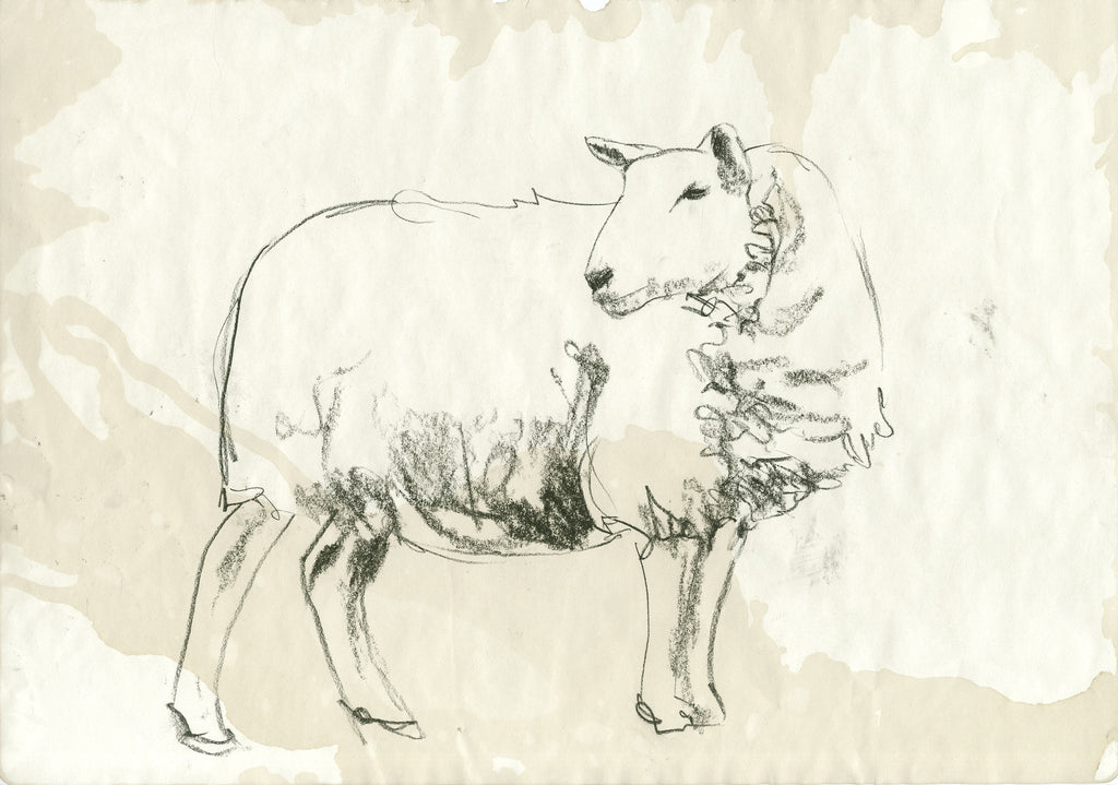 Sheep Sketch facing left