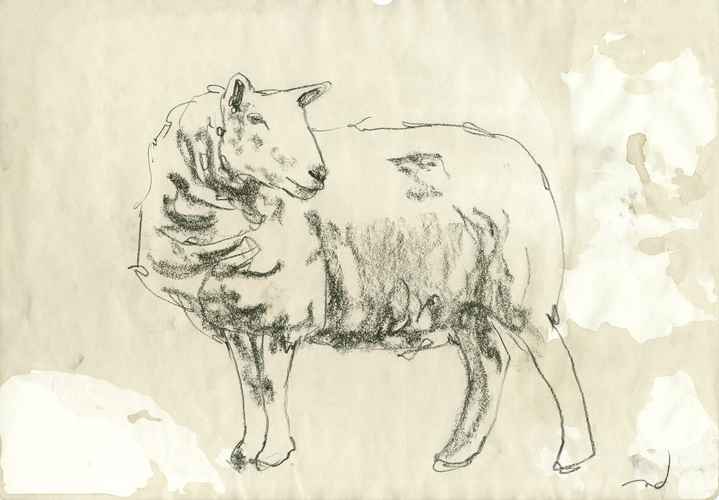 Sheep sketch facing right