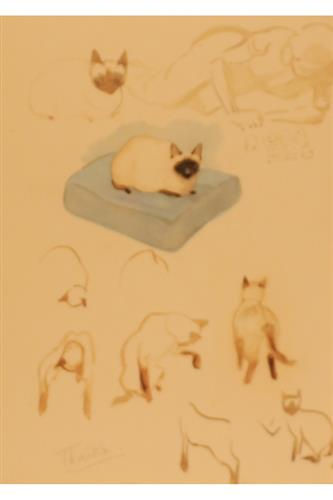POSTCARD: Museum - Cats