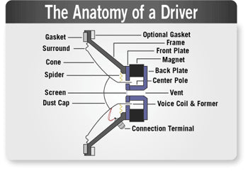 A closer look at the Anatomy of a speaker driver