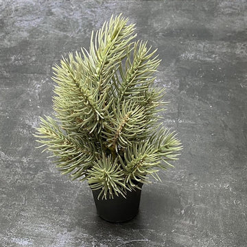 MINI FIR TREE