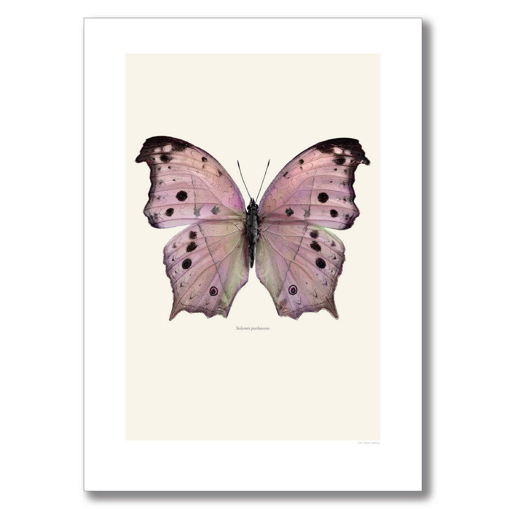 PINK FOREST MOTHER-OF-PEARL BUTTERFLY | PRINT