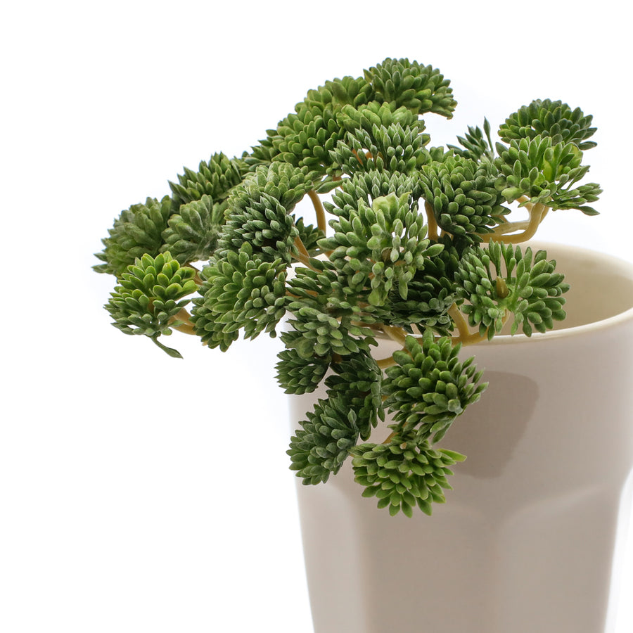 FAUX SEDUM | 3 VARIETIES